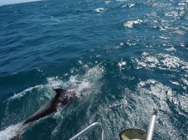 20 dauphin a rio