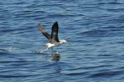 29 albatros