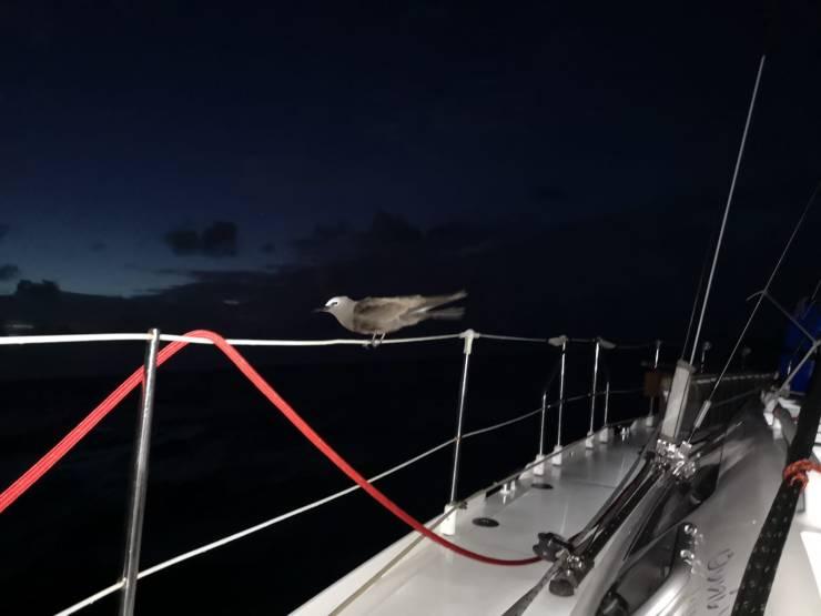 4 fregate dans la nuit