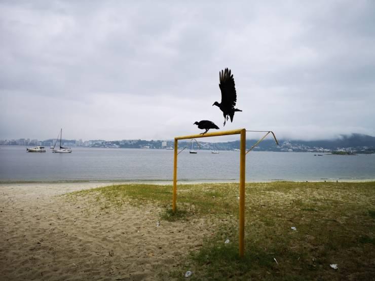 78 vautours