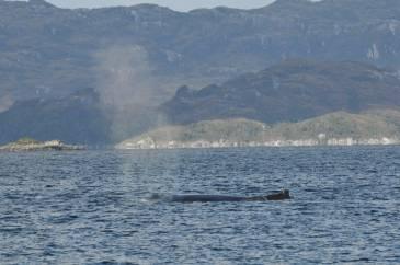 26 baleine brecknock
