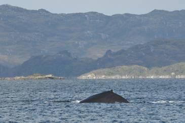 26 baleine brecknock2