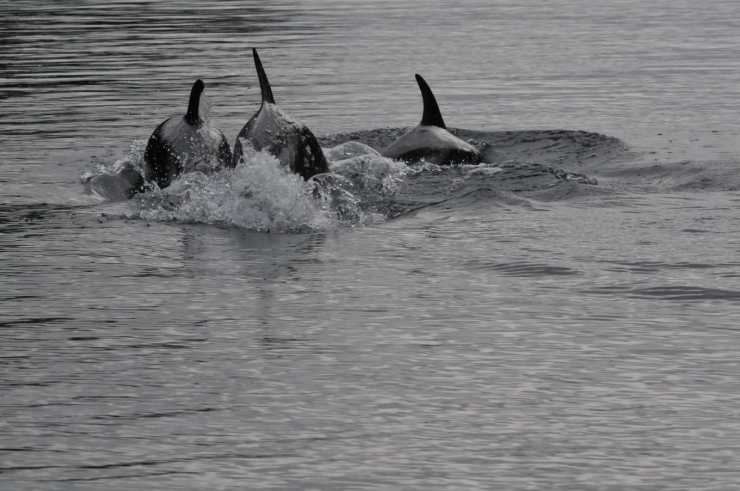 26 dauphins.jpeg