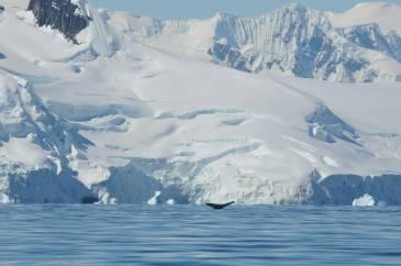 baleine et glacier