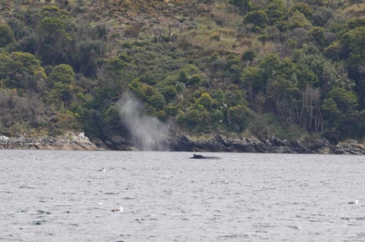 baleine paso ingles