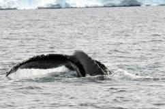 baleine tout pres