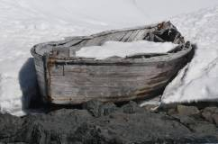 baleiniere gros plan