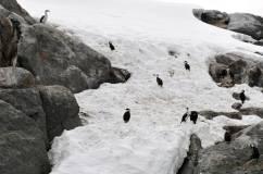 cormorans groupe