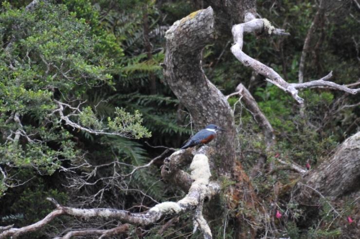 martin arbre
